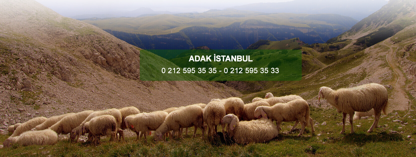 Adak İstanbul